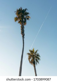 double tree of palm with scenerio of sky - Shutterstock ID 1703899087