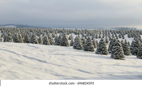 Douglas Fir, Christmas Tree Farm Covered in Snow, a Winter Wonderland, Clouded Sky Above, Daytime - Willamette Valley, Oregon 16:9 format ratio