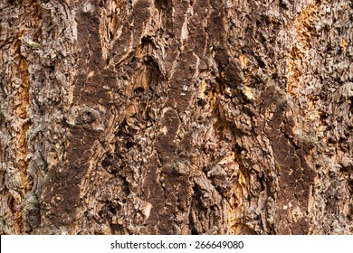 Douglas fir tree bark detail