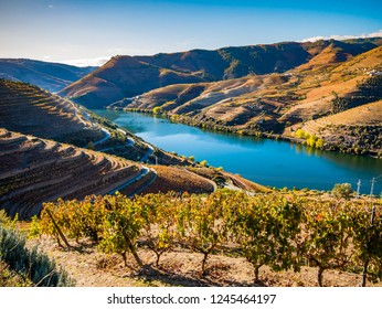 Douro River from the hill