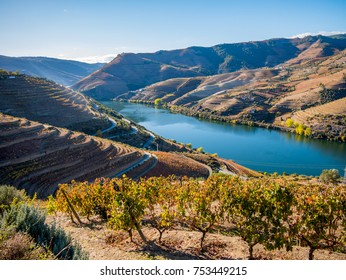 Douro river and wine