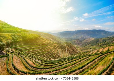 Douro Valley in Porto wine region: Vineyards near Duero river and Pinhao, Portugal Europe