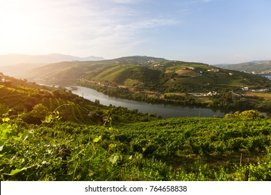 Douro Valley, Portugal. Top view of river, and the vineyards are on hills.
