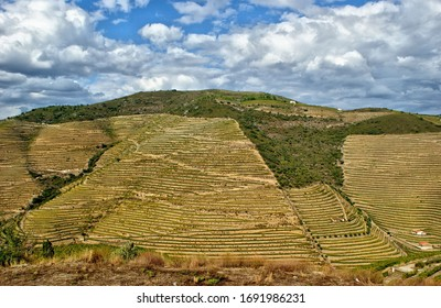 Douro Valley, vineyards and landscape near Regua, Portugal