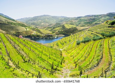Douro Valley. Vineyards and landscape near Pinhao, Portugal
