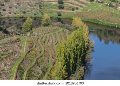 Douro vineyards dressed in autumn colors.