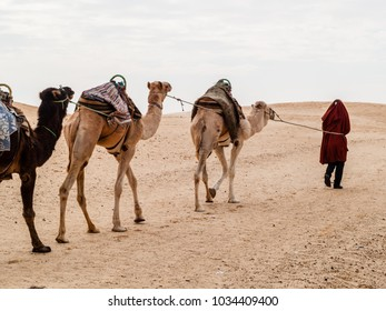 Douz, tunisia, africa, camel caravan in the sahara desert at sunset goes away towards the horizon