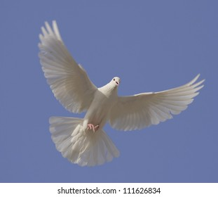 Dove in the air with wings wide open in-front of the blue sky