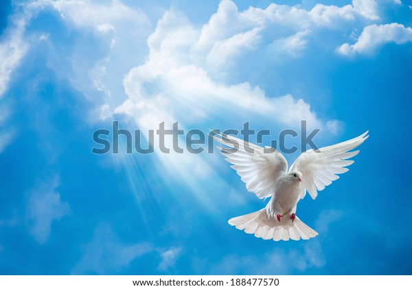 Tauchen Sie in die Luft mit Flügeln weit offen vor der Sonne