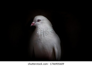 Dove alone coming out of darkness