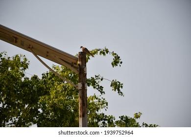 Dove bird at Sukkur Pakistan