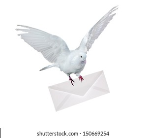 dove carrying envelope isolated on white background