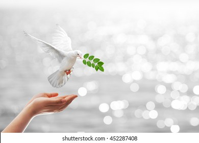 Dove carrying leaf branch out of two hand.Freedom concept and international day of peace 2017.World Water Day