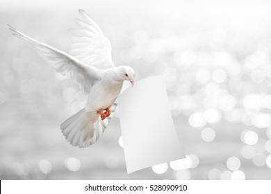 Dove carrying White Paper and Clipping path on White Bokeh Sea Background.World Water Day