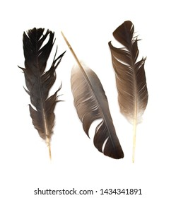 Dove feather isolated on white background.