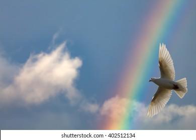 Dove Flying Across a Rainbow Sky Background