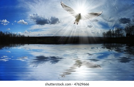 Dove flying in front of the sun
