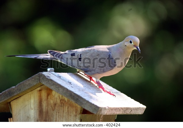 Dove at Home