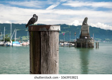 Dove at the Lindau harbor, Bavaria, Germany