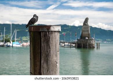 Dove at the Lindau harbor, Bavaria, Germany