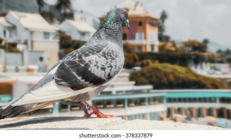 dove of peace against the backdrop of the peaceful years of the city and the beach