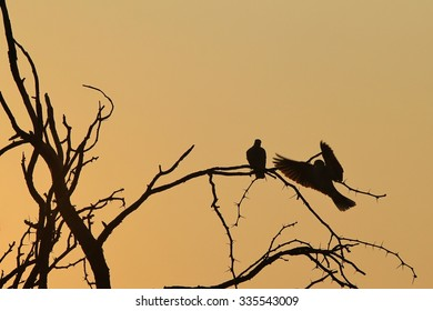 Dove Silhouette - Sunset Background - The Bliss of Harmony and Grace in Nature