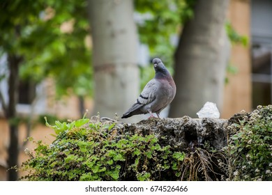 Dove sitting by a water fountain