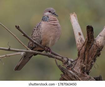 A dove sitting on a  tree