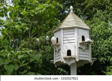 Dovecote and White Doves