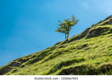 Dovedale, Derbyshire, England. May 20 2018 Lone tree on hill.