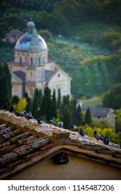Doves on the roof of a building of Montepulciano