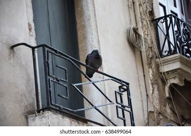 doves on the venetian streets