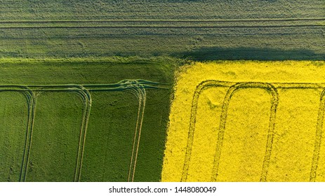 To down aerial view of yellow canola and green grain fields