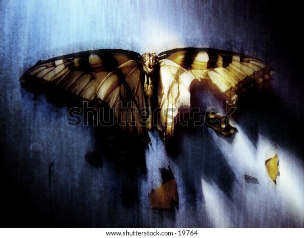 A downed Butterfly wity blurred filter effect