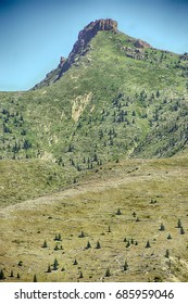 Downed trees litter the hillside 35 years after the eruption, Mt St Helens Volcanic National Monument, Washington