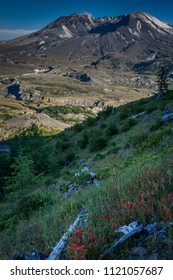 Downed trees and wildflowers in the foreground with views of the volcanoic crater in the background at beautiful Mount St. Helens National Volcanic Monument in Washington State, U.S.A.