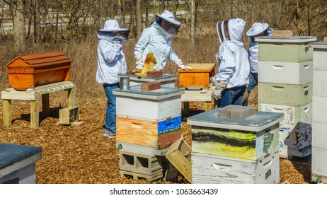 DOWNERS GROVE, IL/USA - APRIL 7, 2018: Four beekeepers work together in Lyman Woods to introduce honey bees to a teaching apiary used to educate the public on the importance of bees and beekeeping.