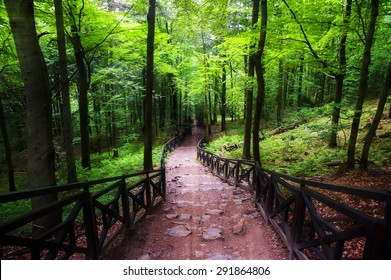 Downhill path through the forest