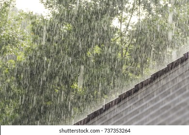 downpour scenery with roof and vegetation