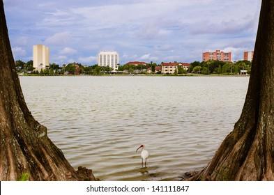 Downtown Lakeland, Florida, from Lake Morton, or Swan Lake