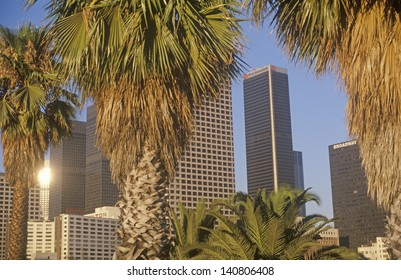 Downtown Los Angeles viewed through grove of palm trees, Los Angeles, California