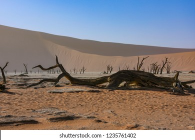 Dozens of tourists every day flock to see the area known as Deadvlei in the Namib desrt in Namibia.