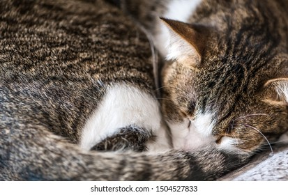 Dozing brown and white cat (close-up shot)