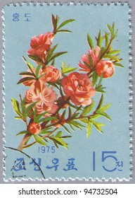 DPR KOREA - CIRCA 1975: A stamp printed in DPR Korea shows Red peach, series, circa 1975