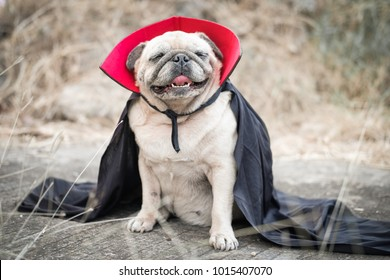 Dracula Pugs.(Pug wearing a Halloween ghost Costume with dark filter simulate.)