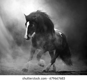 Draft horse in dust