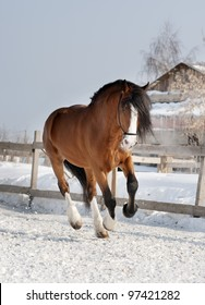 draft horse galloping in paddock
