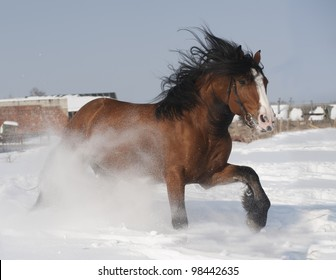 draft horse in snow