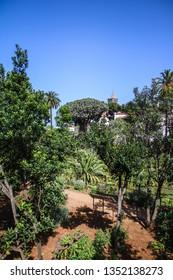 Drago Milenario - Tenerife, Icod de los Vinos