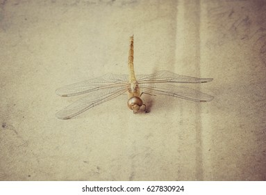 Dragon fly death carcass on dirty cardboard with vintage effect